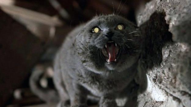 Бешеный кот напал на семерых…