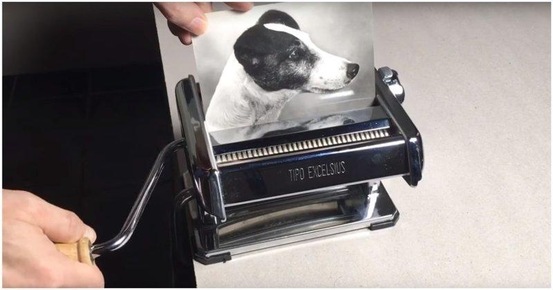 Наглядный пример сжатия изображений Сжатие, Шакалы, видео, изображение, прикол, собака, фотография