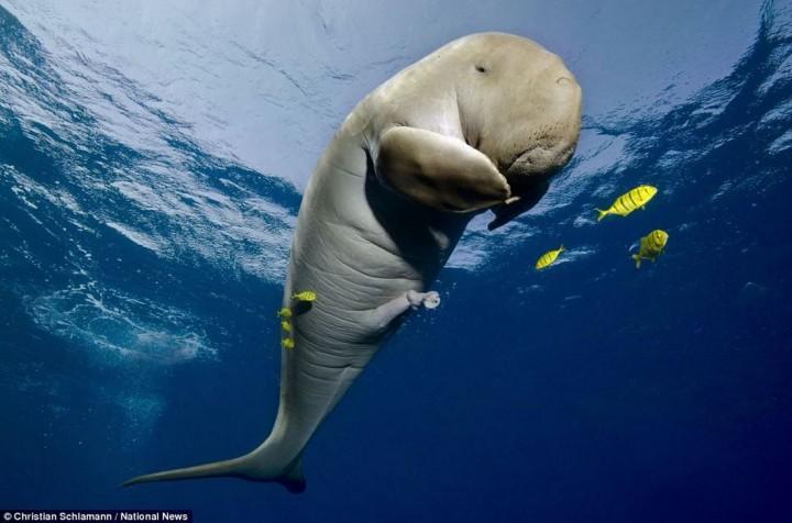 Обитатели морского мира. (19 фото)
