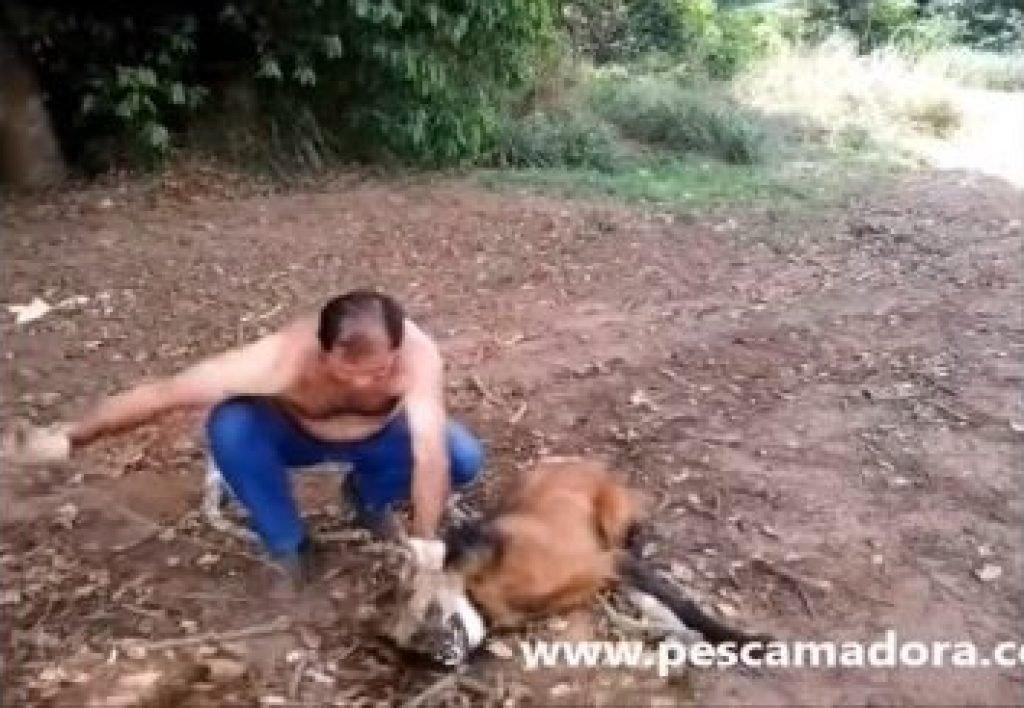 Дальнобойщик спас волка от обезвоживания