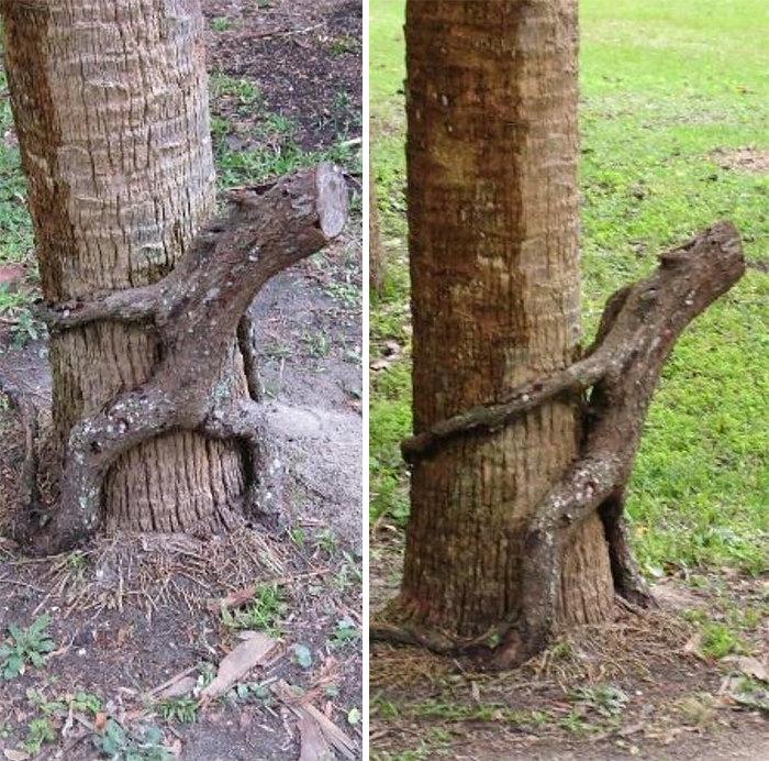 8. Озабоченное дерево дерево, деревья, обман зрения, парейдолия, похоже да не то же, похоже на, похоже на лицо