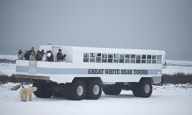 Ночь сбелыми медведями: первый арктический отель наколесах