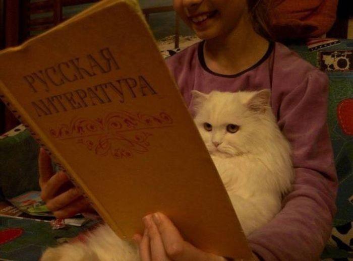 Задумчивые коты