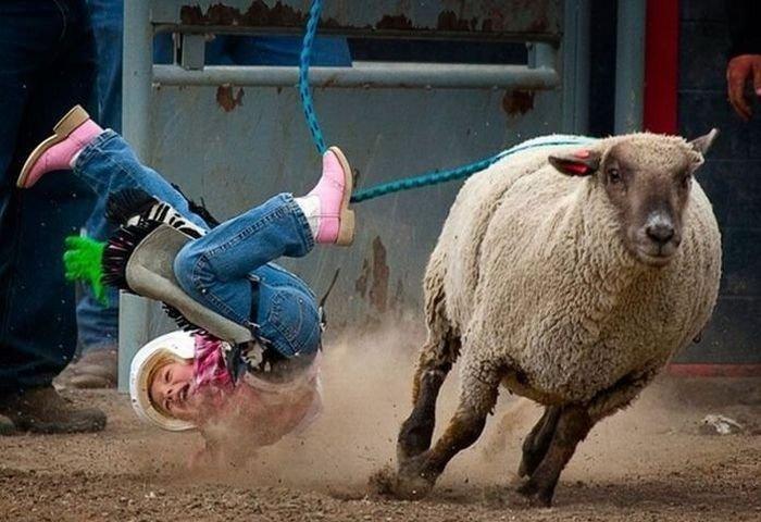 Детское родео с овцами