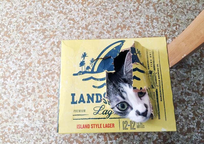 Если кошка видит место, в которое можно забраться - она туда заберется, будьте уверены!