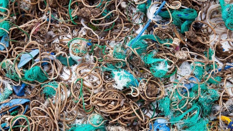 Тысячи резинок оккупировали необитаемый остров. Учёные выяснили, как они там оказались