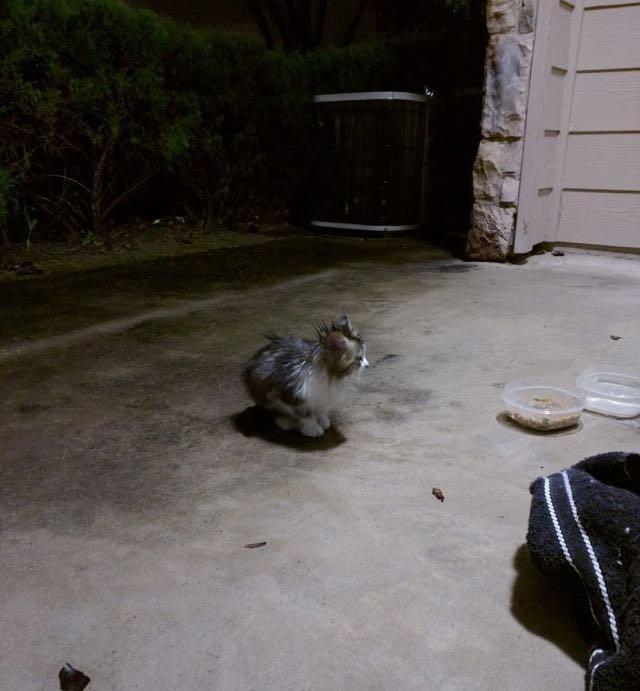 Бродячий котёнок пришел за помощью