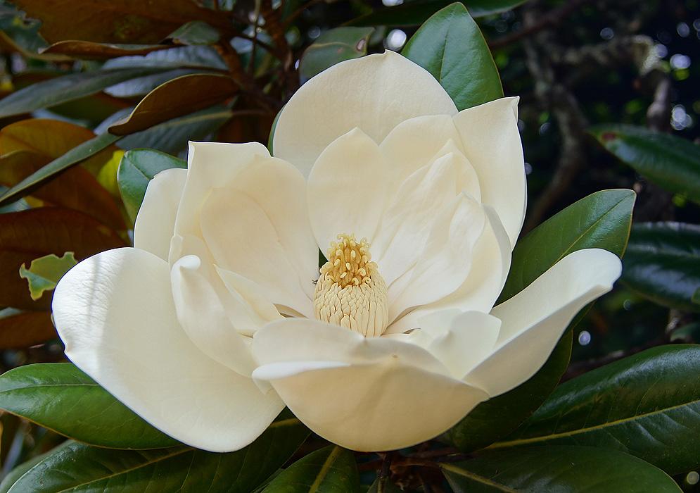 Ароматный сад: самые ароматные садовые цветы и цветки для сада