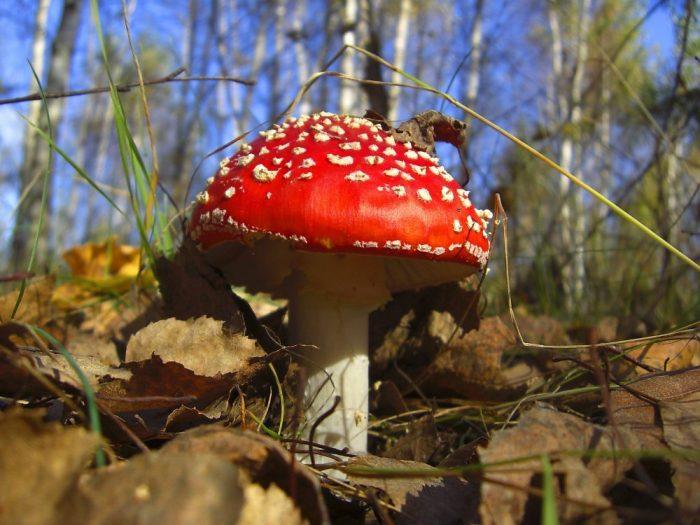 осенние грибы фото - 10
