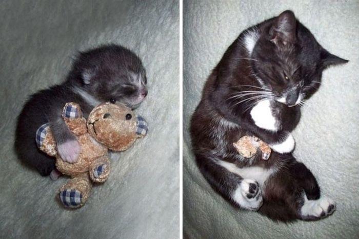 животные со своими игрушками, животные тогда и сейчас