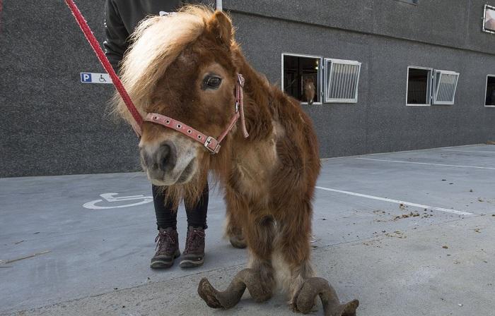Спасение пони, которого держали взаперти много лет