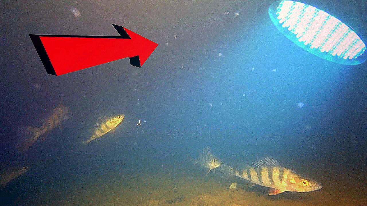 Реакция рыбы на искусственный свет! Подводная съемка