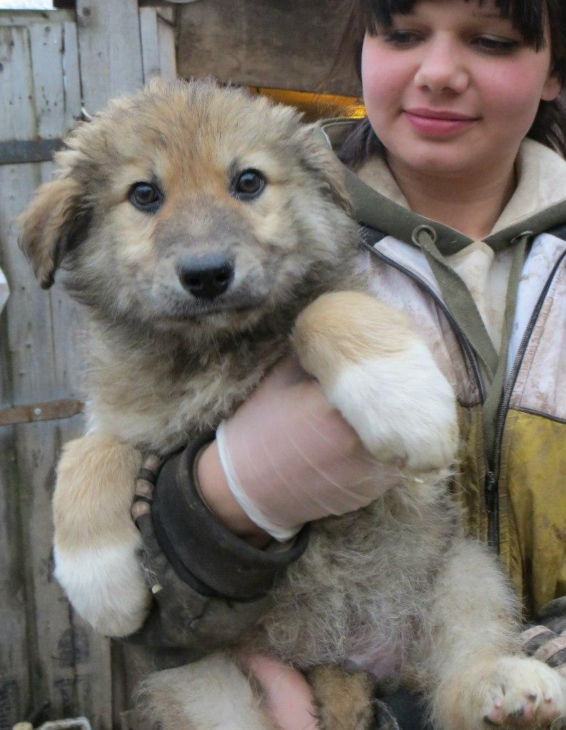 Этот плюшевый щенок Илюша не догадывается о том, какая участь ему уготовлена...