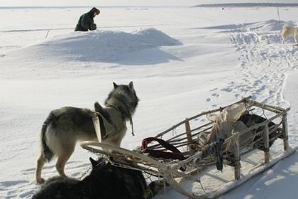 Собака застрелила охотника в Поволжье