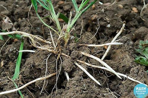 Скоро начнётся активный рост трав.