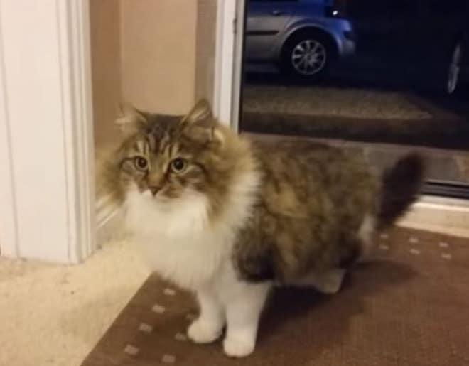 Брошенная кошка умоляла впустить ее в дом, и человек сжалился
