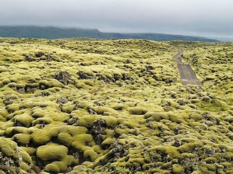 Живописные лавовые поля Исландии