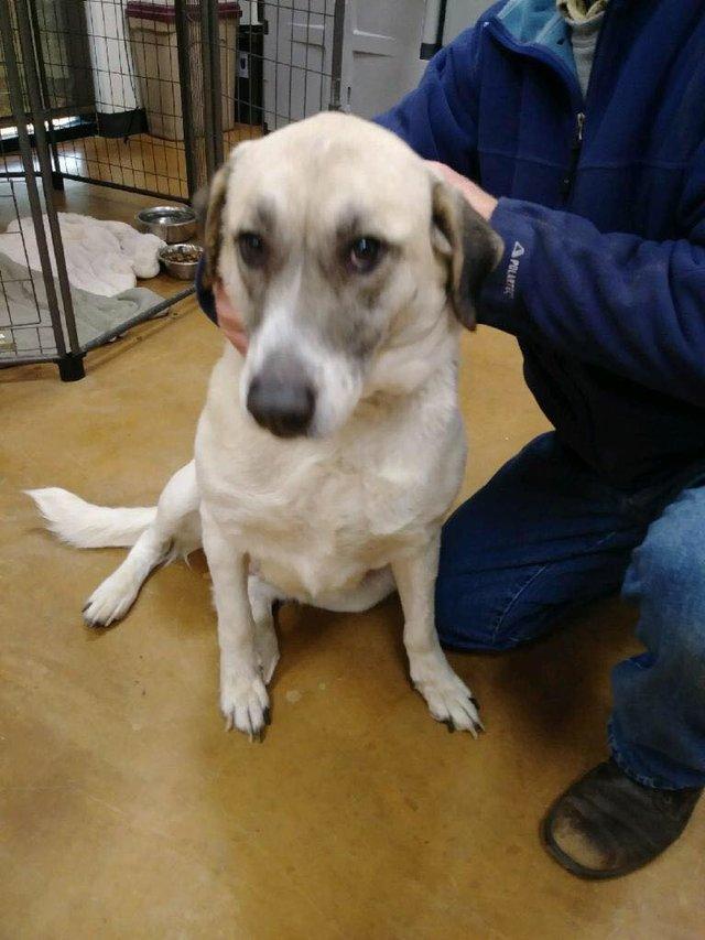 «Оклахомский Хатико»! Собака ДВАЖДЫ возвращалась издалека в свой старый дом, но всё равно оказалась там не нужна