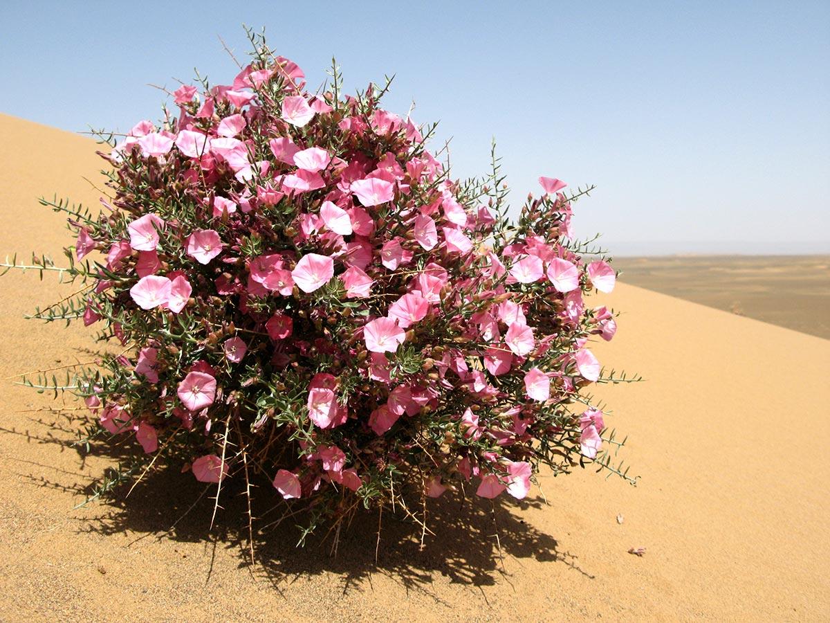 15 роскошных растений для песчаных почв