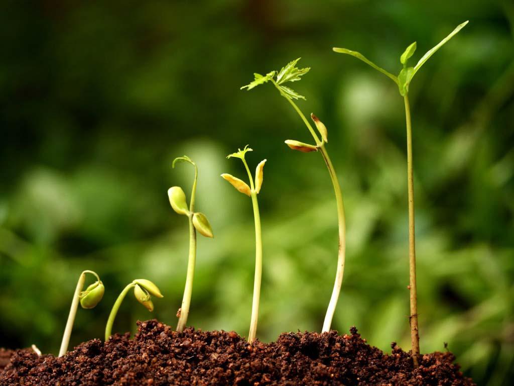 Лучшие стимуляторы роста: применение и характеристики