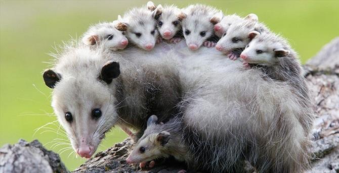Интересные примеры адаптаций в животном мире