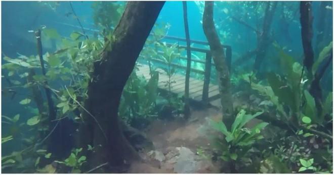 Лес в Бразилии ушел под воду и превратился в невероятный подводный мир