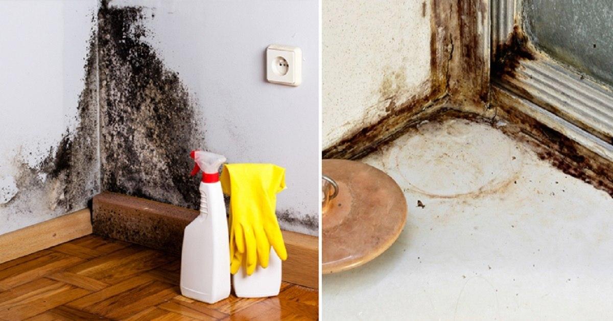 Как избавиться от запаха плесени в квартире