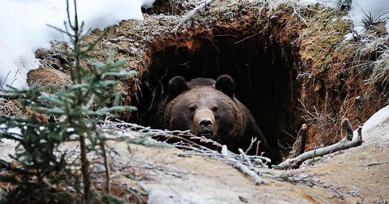 Медвежьи консервы, или Как выжить в берлоге хищника