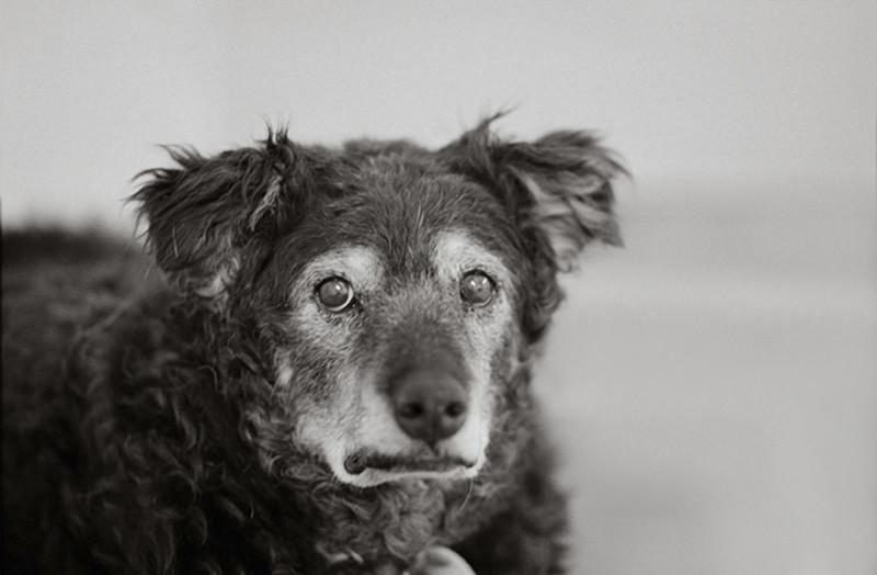 Фотограф делает снимки собак преклонного возраста