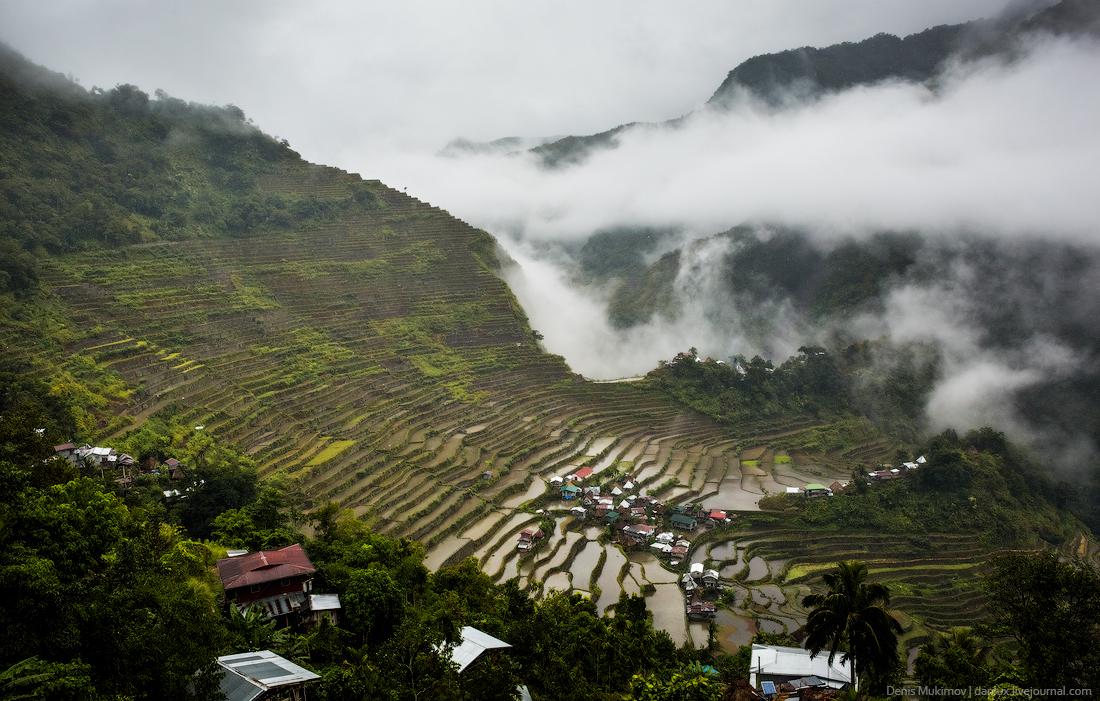 Как на Филиппинах выращивают сыр