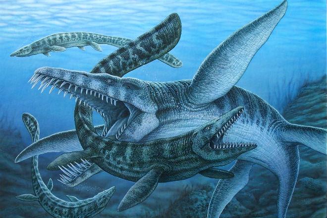 Лидсихтис: древняя рыба размером с мегалодона