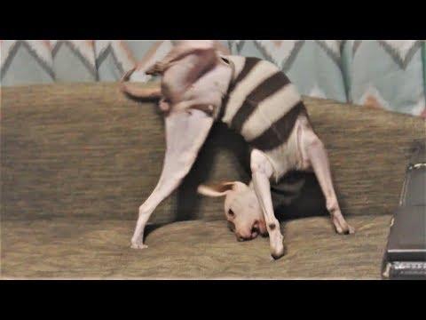 Смешные кошки коты и собаки Приколы про кошек и собак Топовая подборка приколы с животными 2017