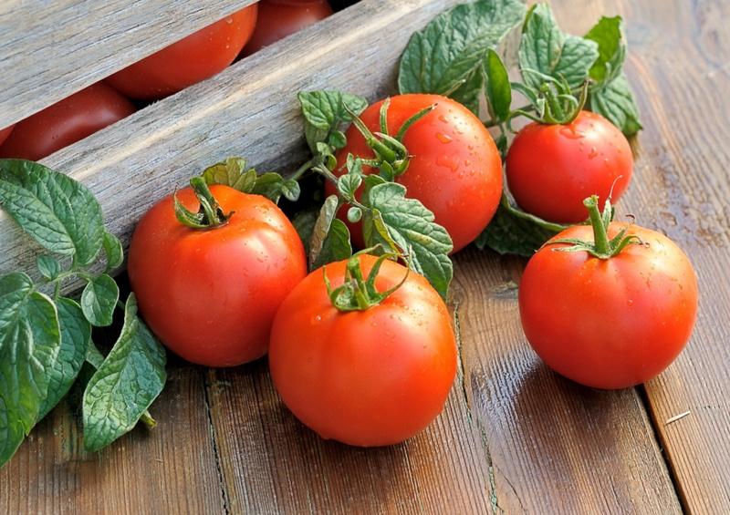 Вредители томатов в открытом грунте и теплице: фото, описание, действенные меры борьбы