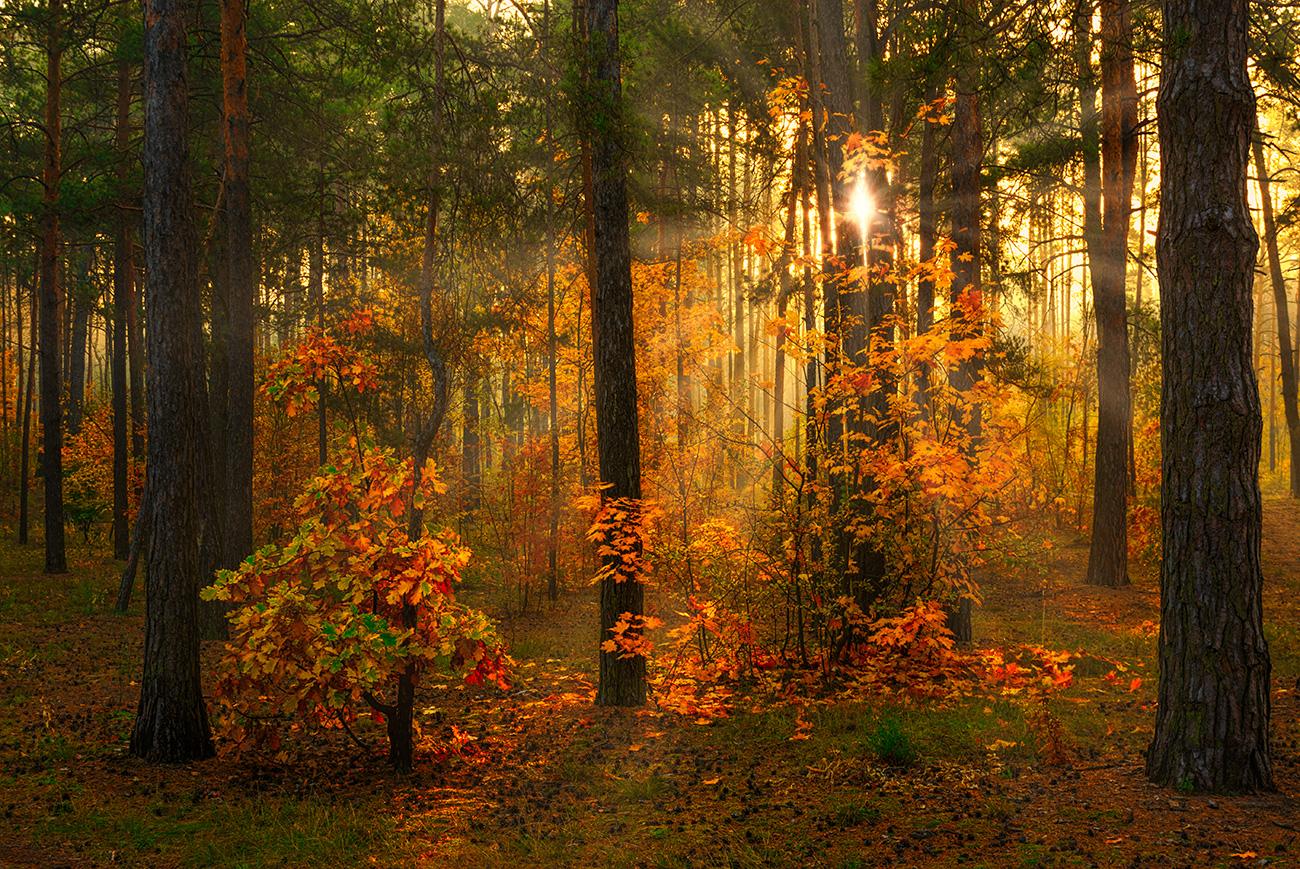 Осенним утром.  Шерман Михаил