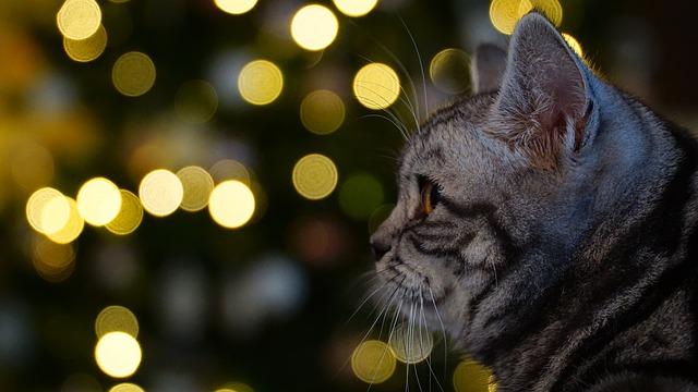Изощрённая месть кота