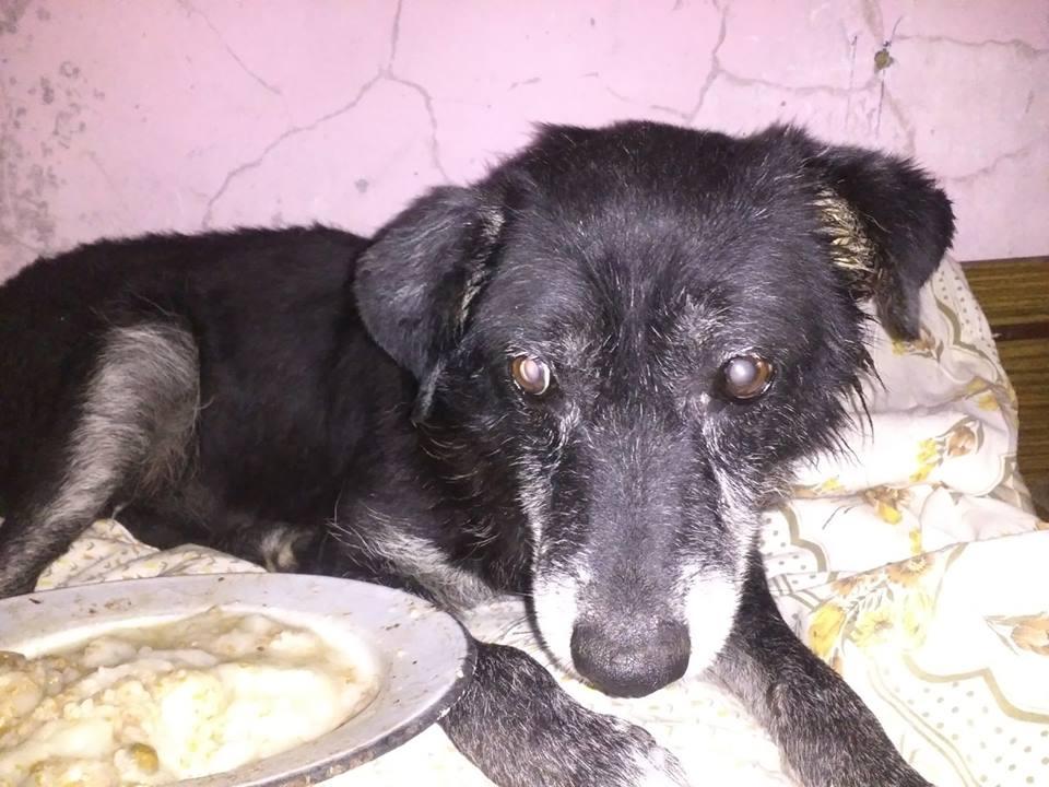 Старый больной пёс готовился к концу, но теперь Жук окружён любовью и заботой