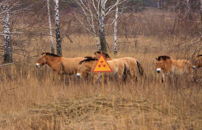 Ученые: фауна Чернобыльской зоны поражает разнообразием