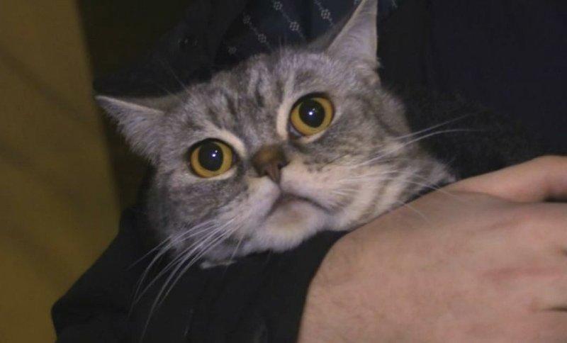 Петербуржец спас кота, выбегая из горящего дома