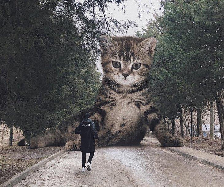 Если бы кошки были большими