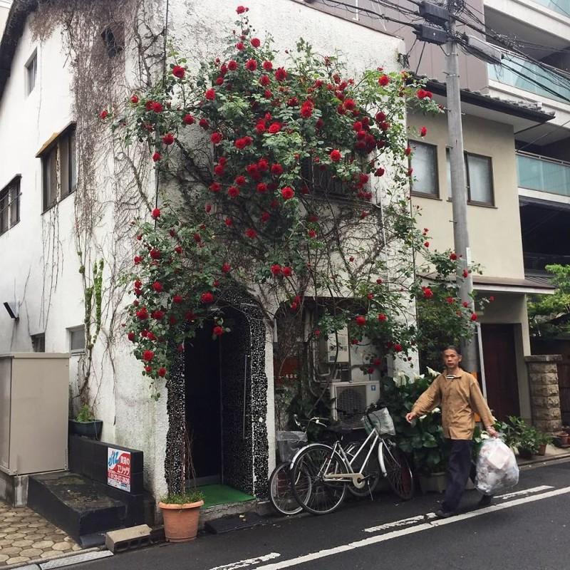 Красные розы в пасмурный день архитектура, дома, здания, киото, маленькие здания, местный колорит, фото, япония