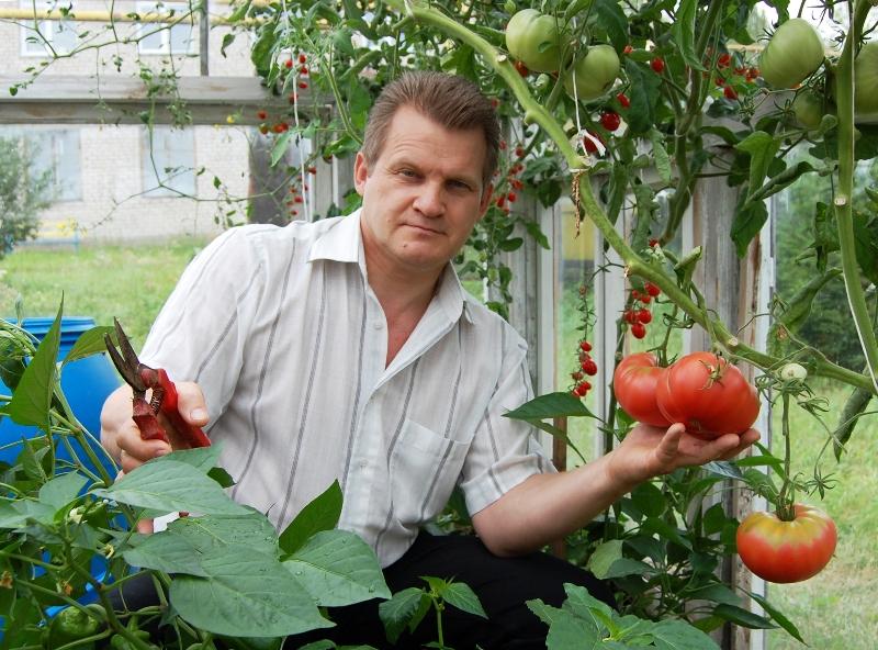 Зачем помидорам аспирин?