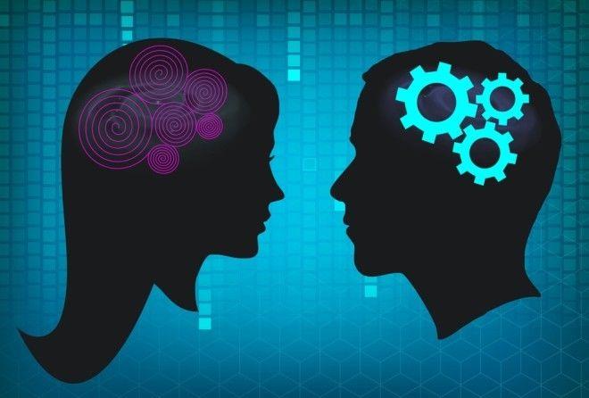 Как сигналы от гениталий доходят до мозга