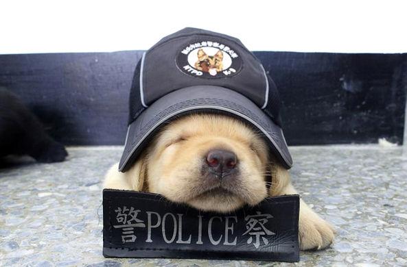 СМИ рассказали о «самой милой полицейской собаке в мире»