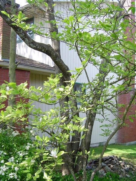 Домик на дереве своими руками - супер идея!