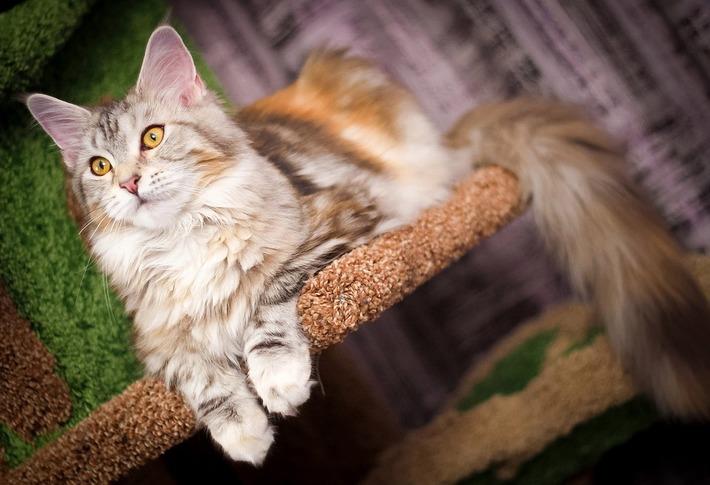 Слишком навязчивые кошачьи ласки начали действовать на нервы
