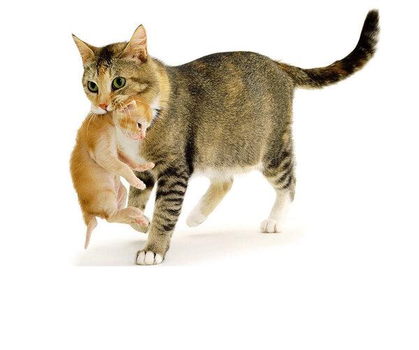 «Договорилась с котом, чужих котят домой не таскать. А он щенка приволок…»