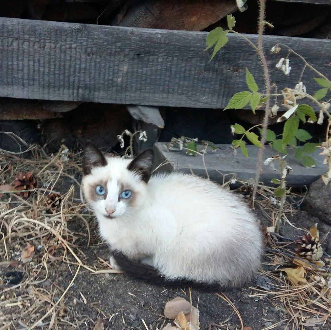 Знакомьтесь, котенок Гав из мультика нашего детства