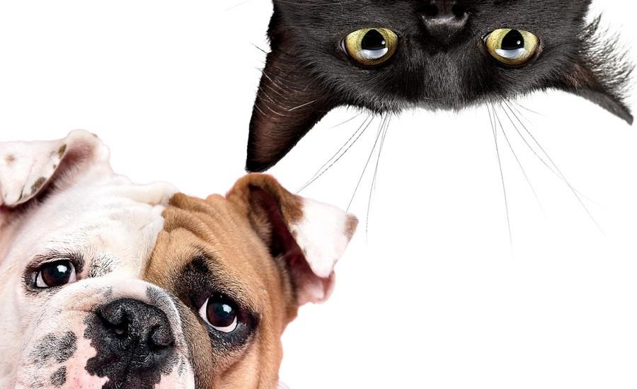 Кошки умнее и хитрее собак