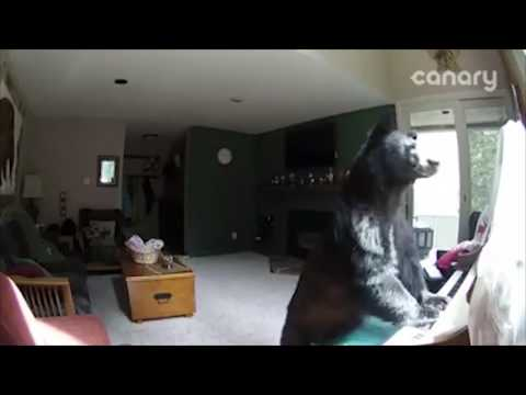 """В США медведь влез в дом и """"сыграл"""" на фортепиано"""