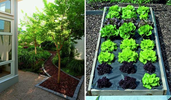 Слева: мульча не должна соприкасаться со стволами деревьев и кустарников, в противном случае их кора может начать подпревать. Справа: черное нетканое агрополотно заметно облегчает жизнь садовода.